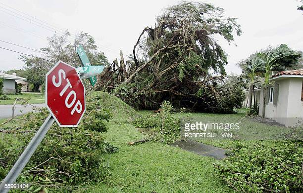 Blown over trees and street signs during the passage of Hurricane Wilma 24 October 2005 in Miami FL Wilma pounded Florida with torrential rain and...