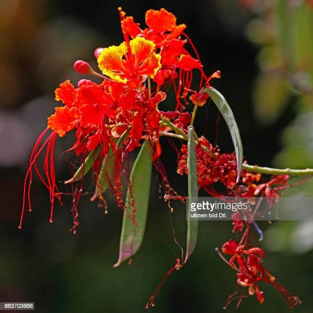 Blütenpracht im Botanischen Garten Jardim Botânico Funchal Madeira Portugal