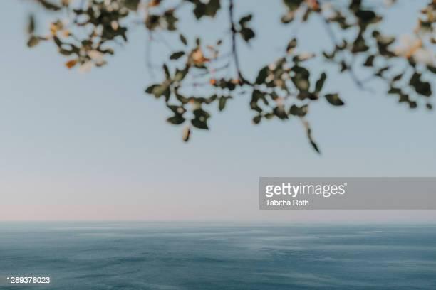 blätter baum ast mit meer im hintergrund sommerlich mit textfreiraum - baum stock pictures, royalty-free photos & images