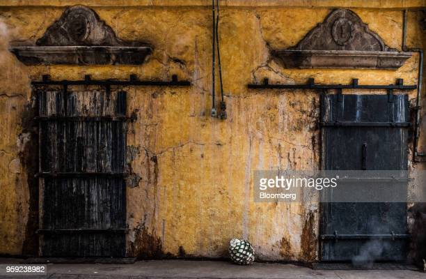 A blue agave pit referred to as a pineapple sits at the Becle SAB Jose Cuervo distillery in the town of Tequila Jalisco state Mexico on Thursday May...
