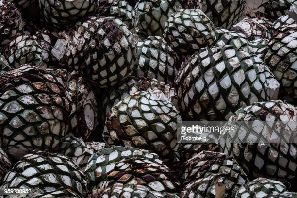 Blue agave pits referred to as pineapples sit in a pile at the Becle SAB Jose Cuervo distillery in the town of Tequila Jalisco state Mexico on...