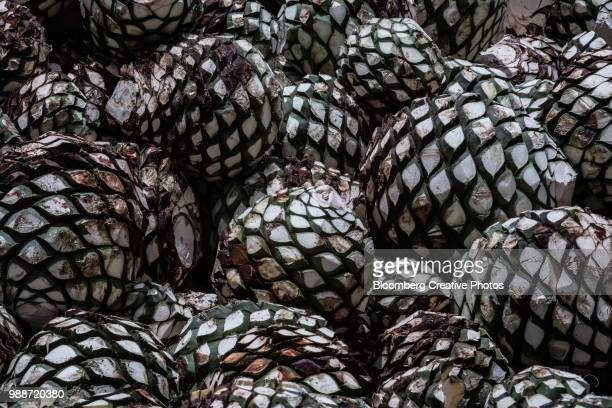 Blue agave pits, referred to as pineapples, sit in a pile