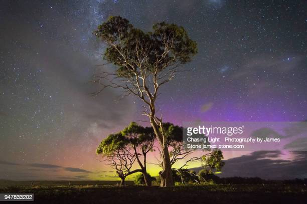 blue and green aurora behind gum trees - aurora australis stock pictures, royalty-free photos & images