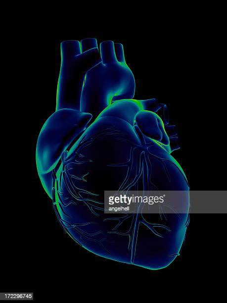 blue and green human heart on black background - human heart stock pictures, royalty-free photos & images