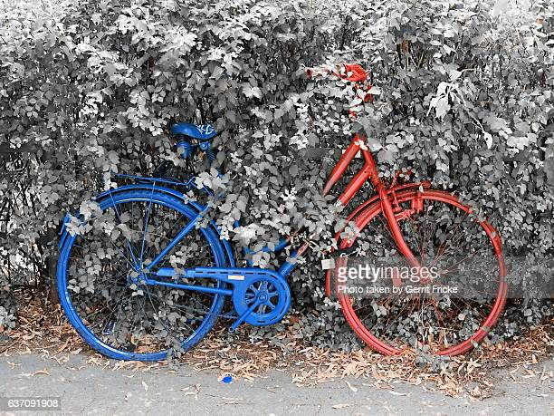 A blue and red colored bicycle leaning at a grey bush