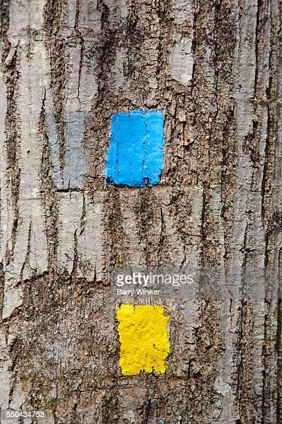 blue and yellow trail markers on tree - トレイル表示 ストックフォトと画像