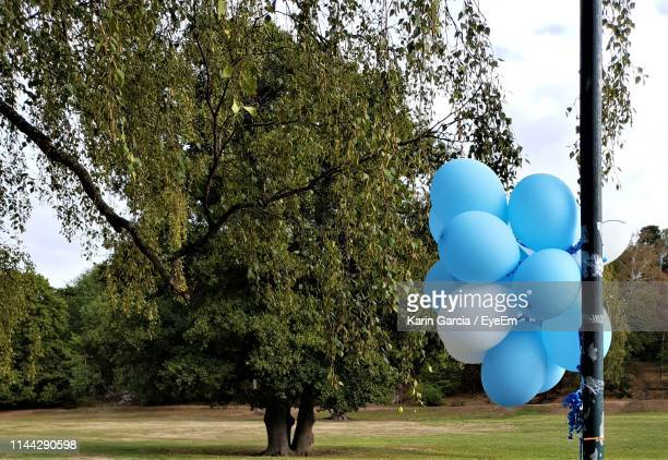 blue balloons tied in pole against trees - karin garcia eyeem stock pictures, royalty-free photos & images