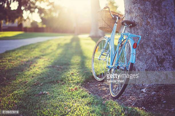 Blue Bike next to tree in sunlight