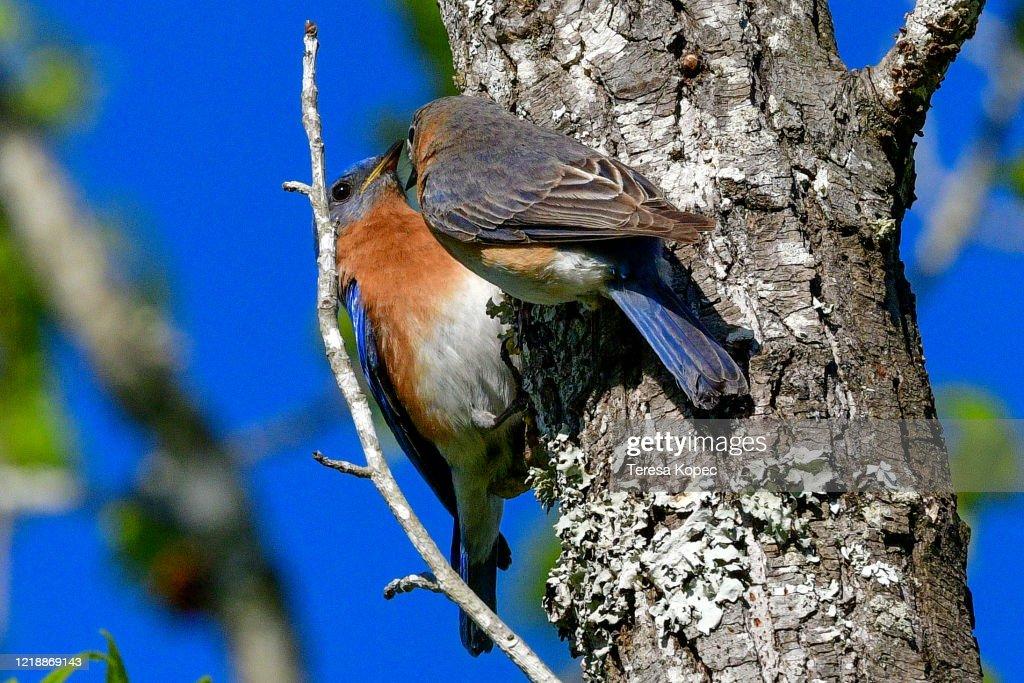 photo of bluebird nest