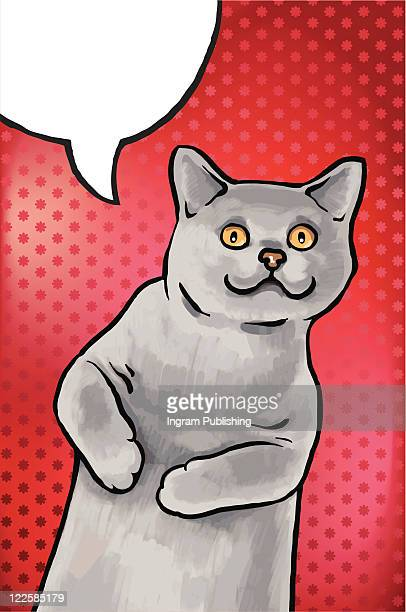 blue british shorthair cat. - banner vector stock pictures, royalty-free photos & images