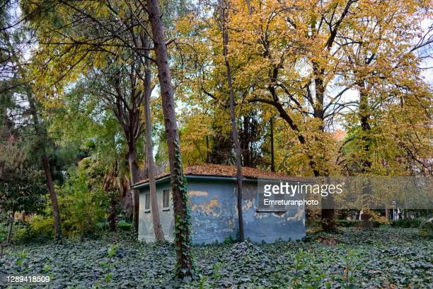 blue building under trees in public park ,izmir. - emreturanphoto stock pictures, royalty-free photos & images