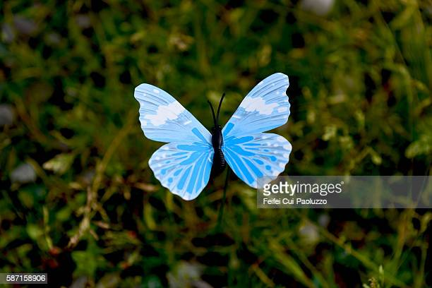 Blue Butterfly at Bantry Bay of Cork County in Ireland