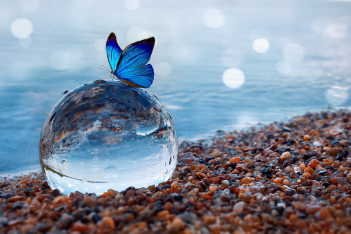 Blue butterfly on a glass ball in the water 1167912687