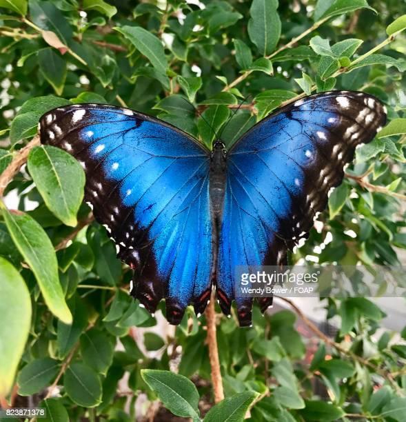 Blue butterfly on tree branch
