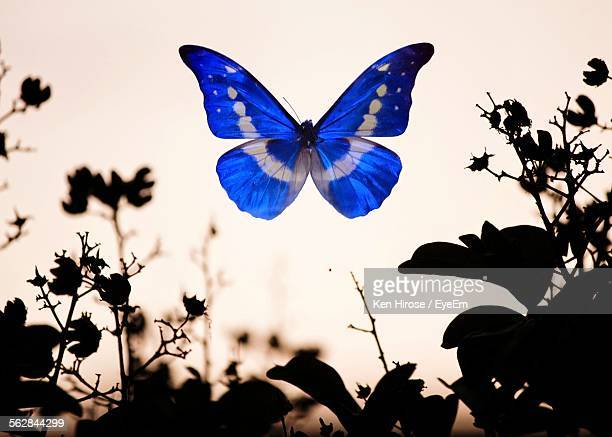 Blue Butterfly Over Silhouette Plants