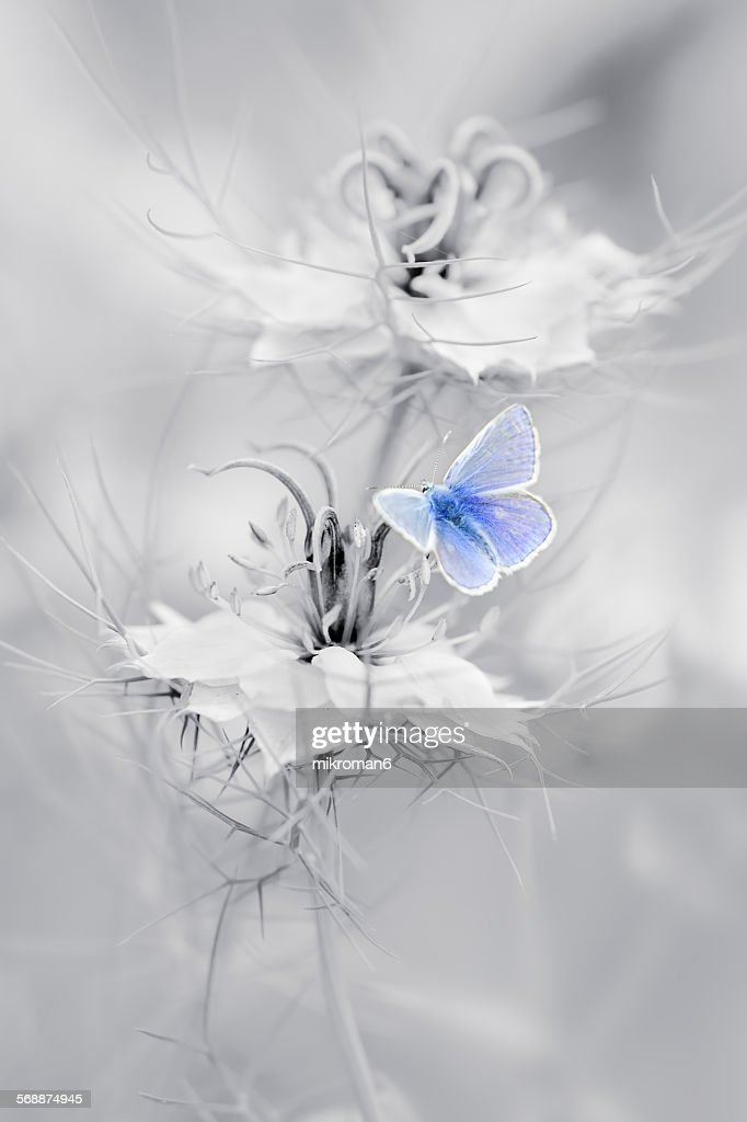 Blue butterfly : Stock Photo