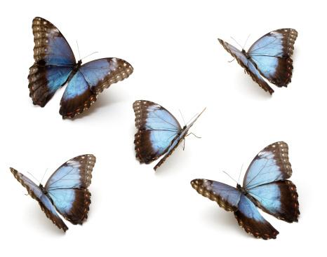 Blue Butterfly's 173222521