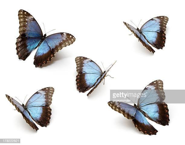 ブルーのバタフライ - ターコイズブルー ストックフォトと画像