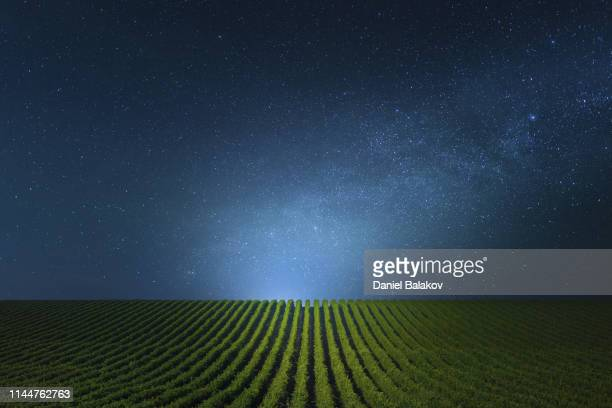 blue clear night over the vineyards. - night stock pictures, royalty-free photos & images