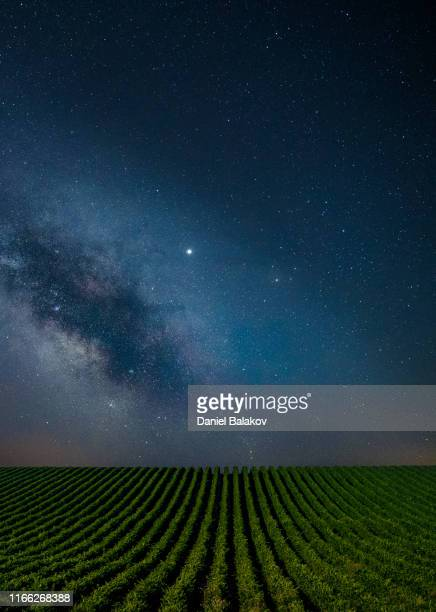 blue clear night over the vineyards. - wine harvest stock pictures, royalty-free photos & images