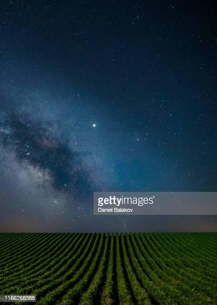 notte blu limpida sui vigneti. - clear sky foto e immagini stock