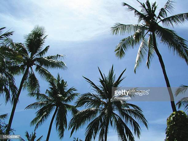 Blue, Cloud, Day, Frond, Group Of Objects