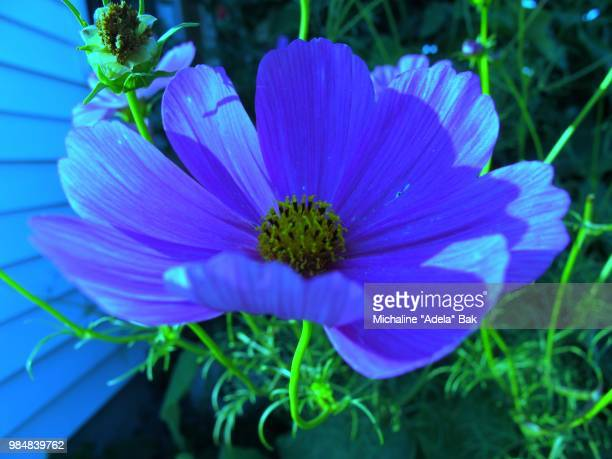 A Blue Cosmos