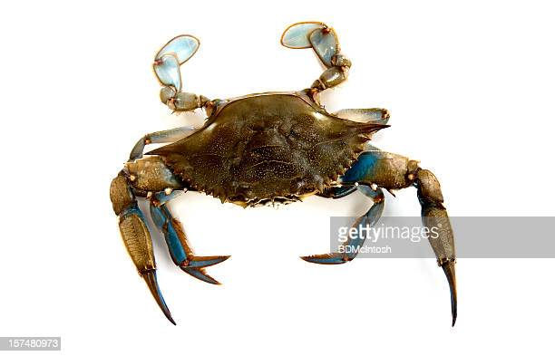 blue crab - blue crab stock pictures, royalty-free photos & images