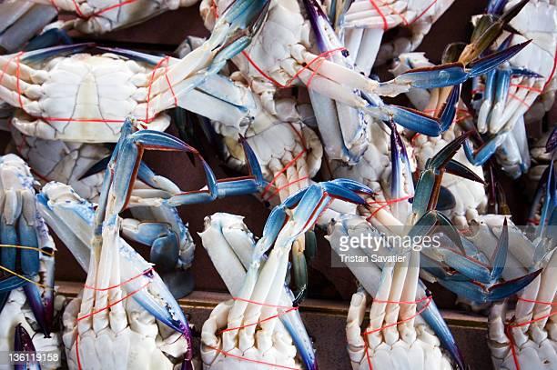 Blue crabs at fish market