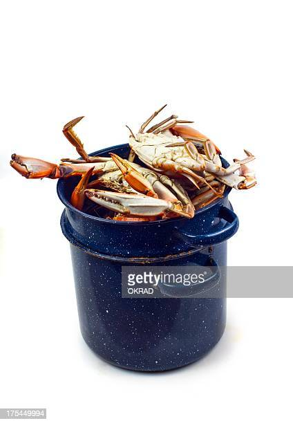 blue crabs in seafood cooking pot on white background - blue crab stock photos and pictures