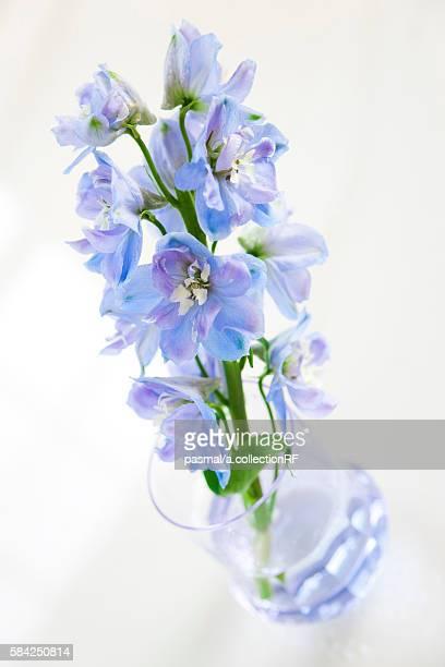 blue delphoi flowers - delphinium stock pictures, royalty-free photos & images