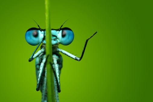 Blue Dragonfly Sitting on Blade of Grass 108310229