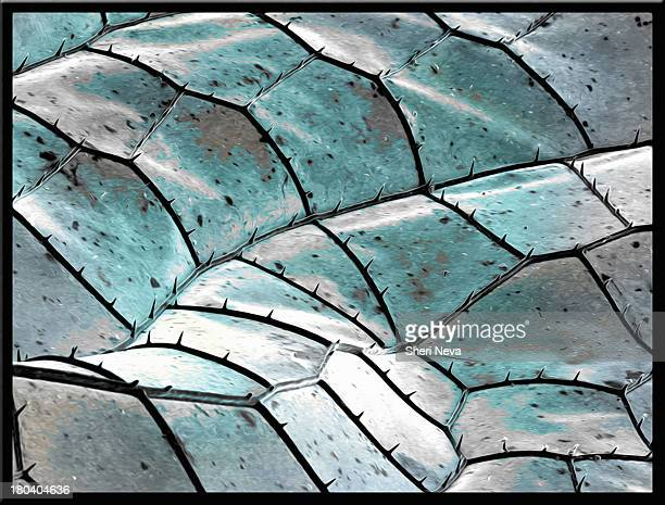 blue dragonfly wing, sem, color enhanced - scanning electron microscope stock pictures, royalty-free photos & images