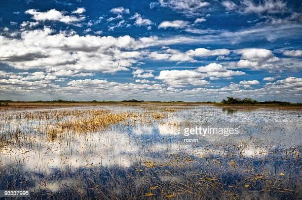Blue Everglades