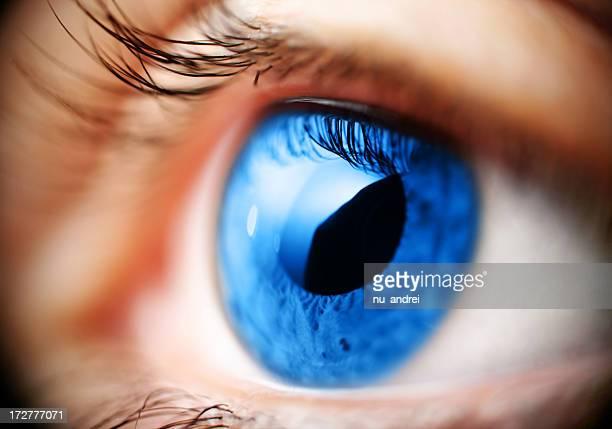 Blaues Auge Makro