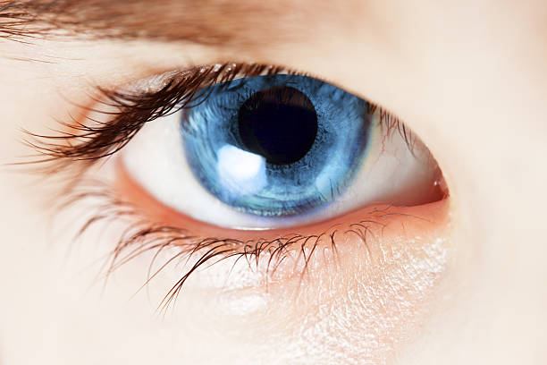bluest eye in search of identity An overview of the bluest eye study help quiz full glossary for the bluest eye although his racial and sexual ambiguities confine him to a life of no identity.
