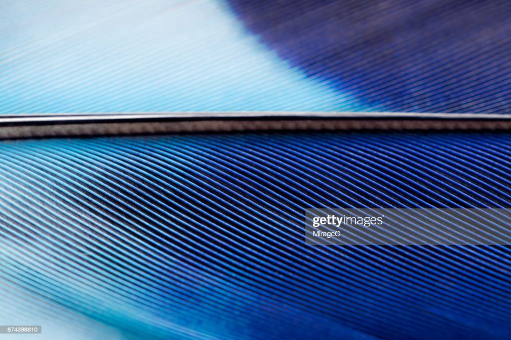 Blue Feather Texture Macrophotography : Stock Photo