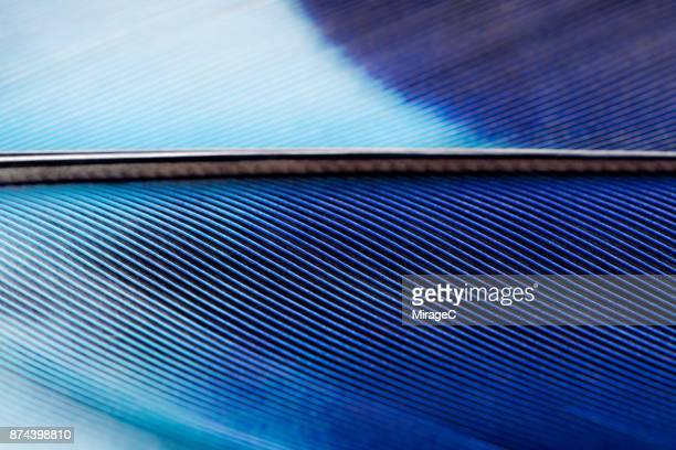 blue feather texture macrophotography - piuma foto e immagini stock