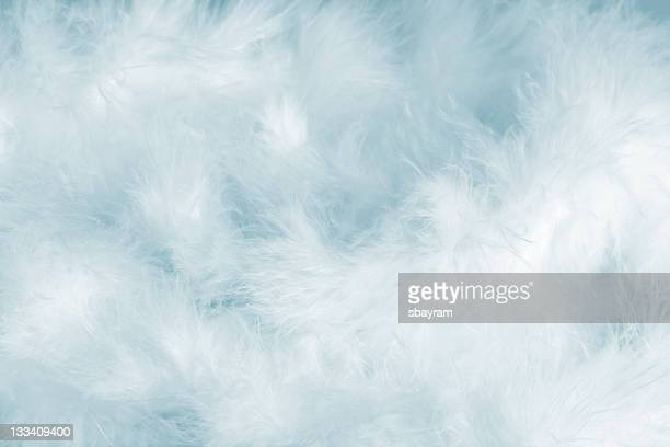 blue feathers - feather stock pictures, royalty-free photos & images