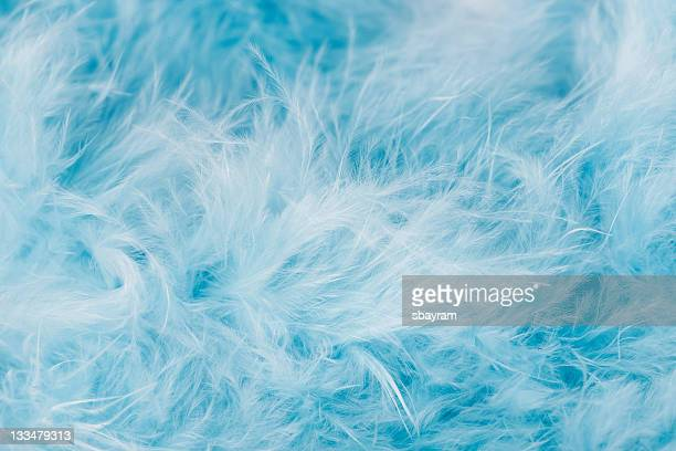 Blue Federn