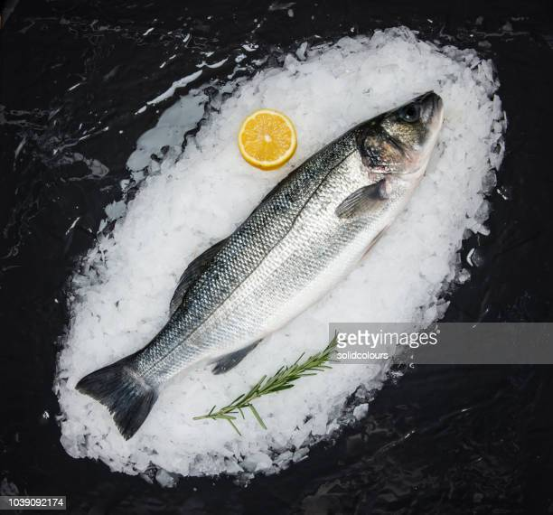 blue fish on ice - fresh seafood stock photos and pictures