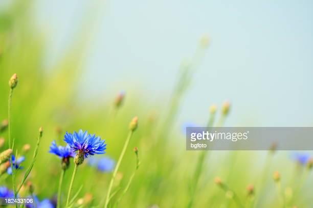 Blaue Blumenmuster