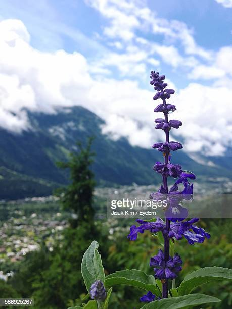 Blue Flowers Blooming On Mountain