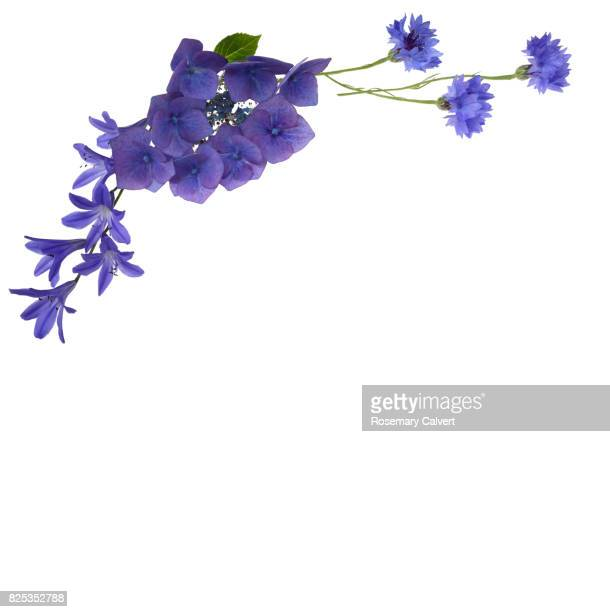 Blue flowers create design top left above white copy space.
