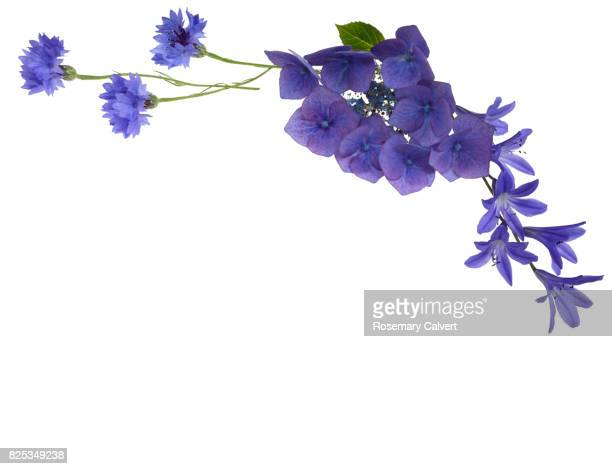 Blue flowers create design top right above white copy space.