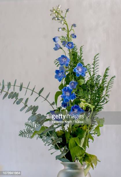Blue flowers to Amparo