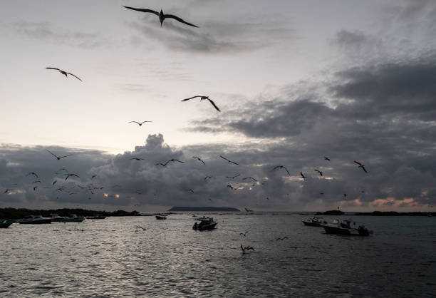 ECU: Nature and Human Lives Seek Equilibrium In Galapagos