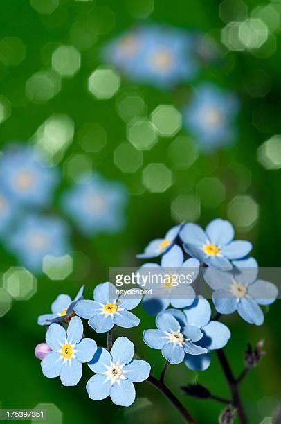 Blue vergessen, mich nicht auf einem grünen Hintergrund mit Blumen