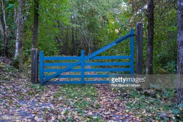 blue gate blocking a forest road - finn bjurvoll stock-fotos und bilder