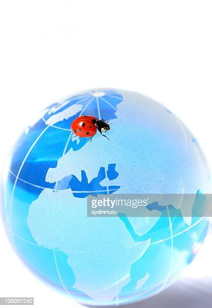 Blue Globe and Ladybug